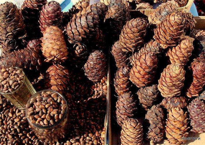 Как сделать мягкими кедровые орешки 430